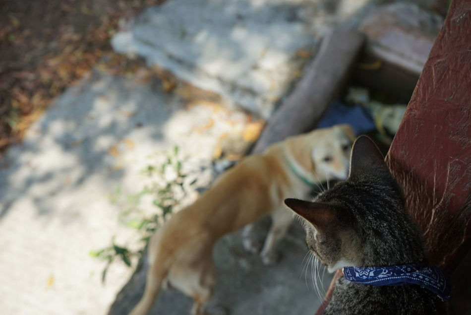 Cats And Dogs Cat Dog EyeEm Koh Phangan Streetlevel Culture Focus On Foreground Island Life