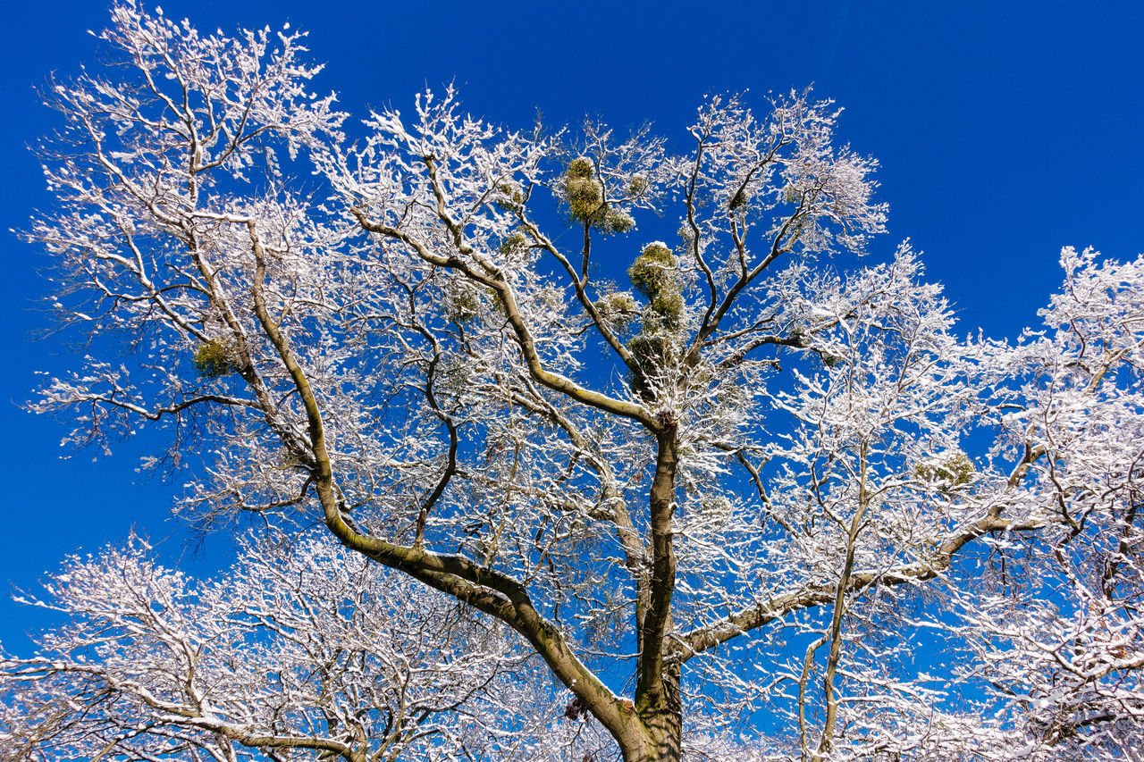 Georgengarten - Hannover Bare Tree Beauty In Nature Blue Branch Clear Sky Day Growth Low Angle View Nature No People Outdoors Scenics Sky Snow Snow On Trees Snow Trees Sunny Tranquil Scene Tranquility Tree Tree Trunk