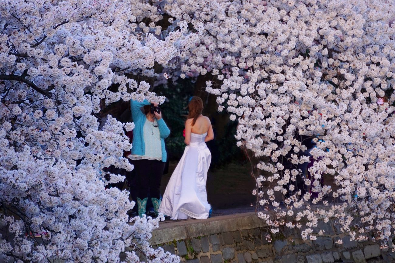The center of attention Bride Cherry Blossom Festival Tidal Basin Washington DC Photographer Wedding Taking Photos Spring Has Arrived Looking To The Other Side The Moment - 2015 EyeEm Awards