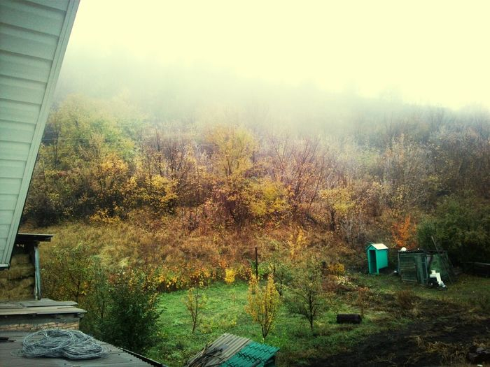 Золатая осень