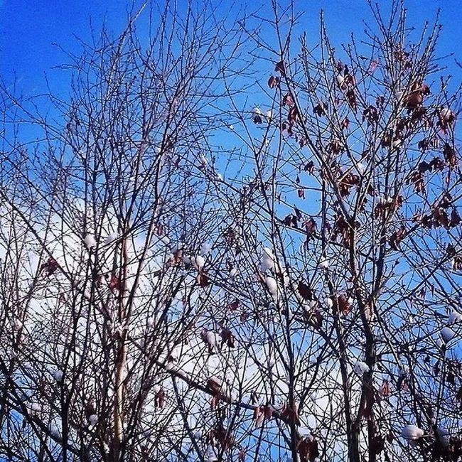 なおのしんphoto お兄ちゃんバイト 送迎係 昼間はこんなにいい天気❤でも気温は最高で -4土曜日でした:;((•﹏•๑)));: