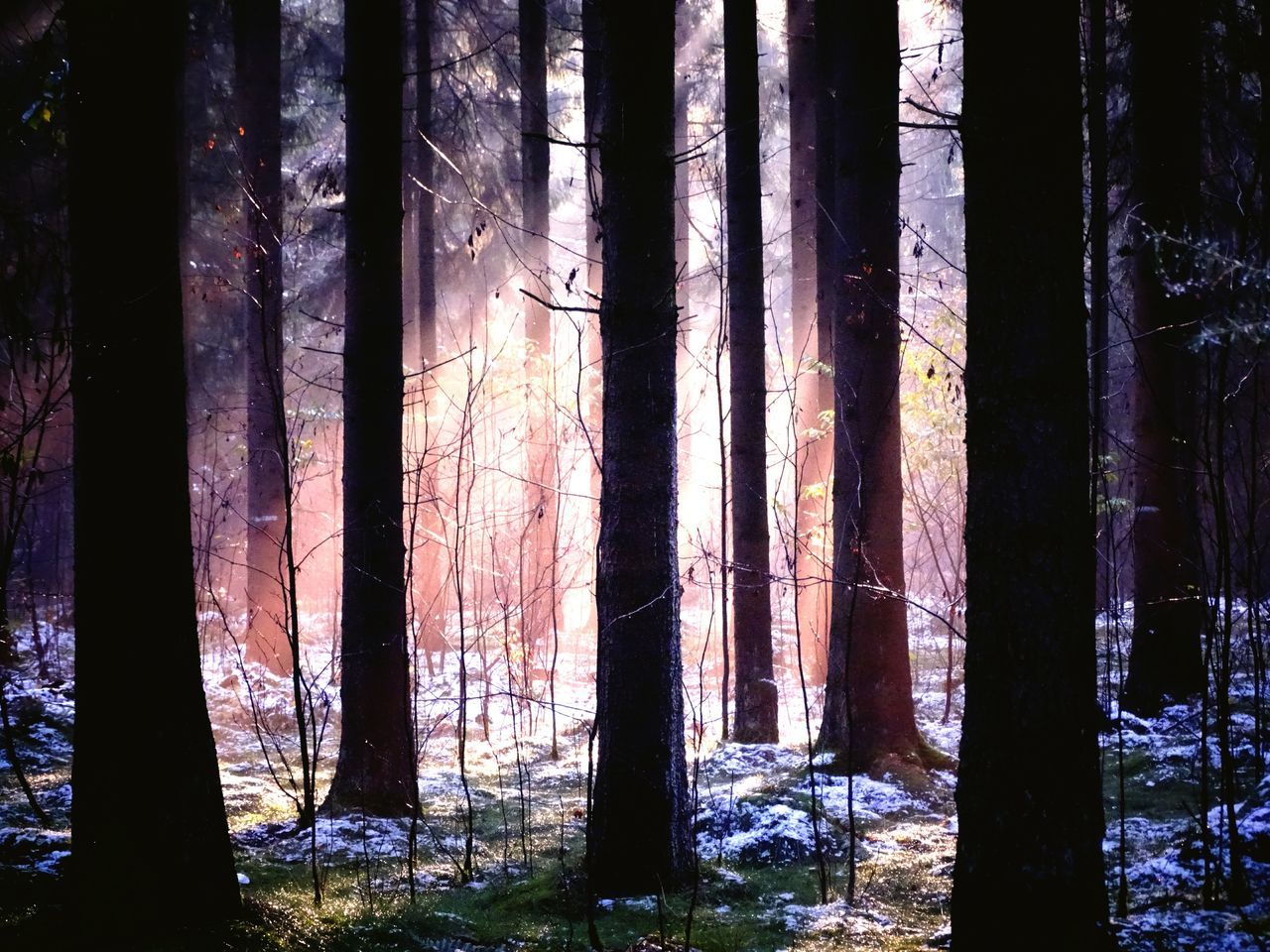 forest, tree trunk, tree, nature, woodland, no people, forest fire, landscape, wilderness area, day, outdoors, bleak