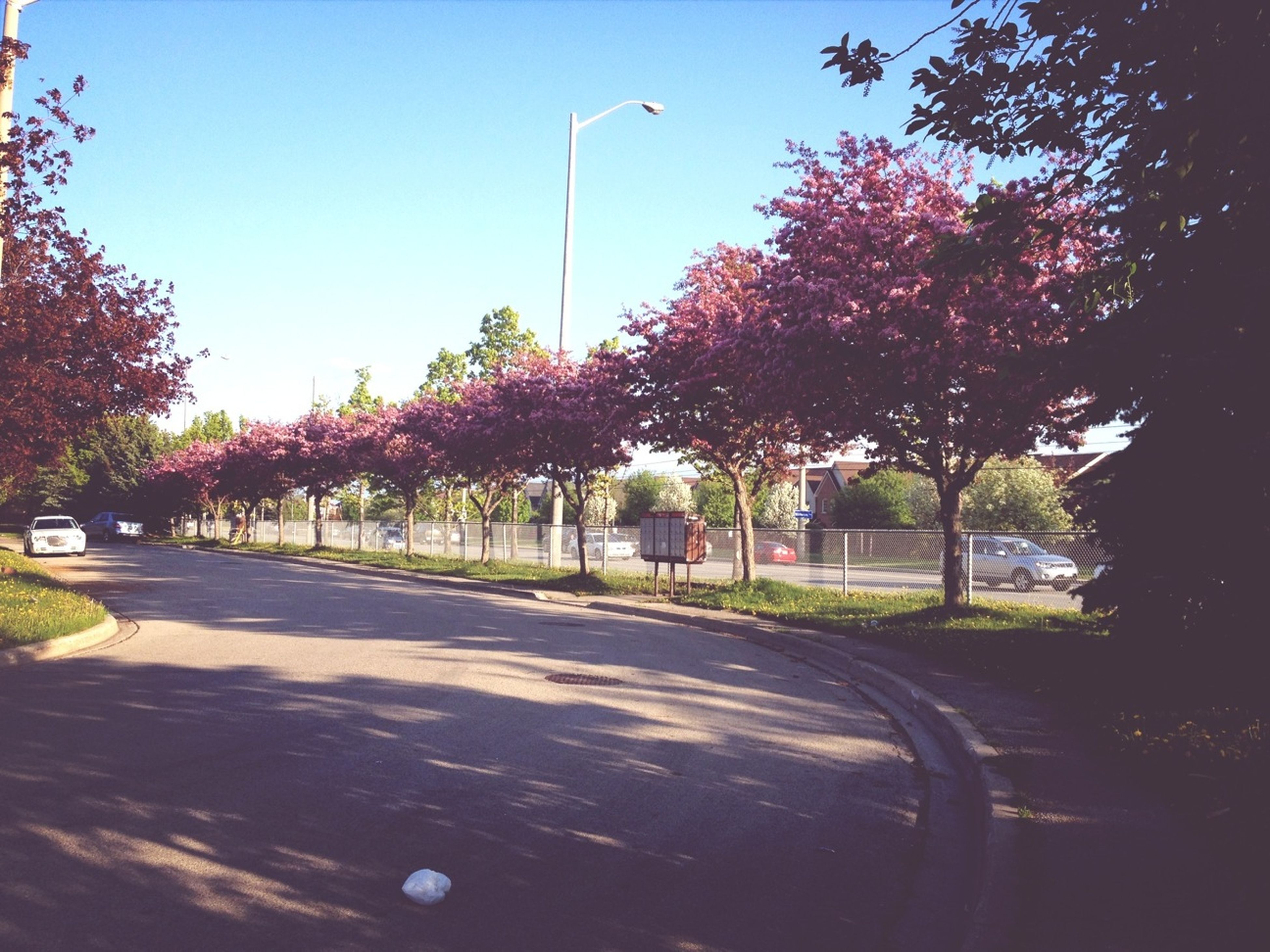 tree, road, transportation, the way forward, road marking, street, clear sky, sky, car, street light, empty, asphalt, diminishing perspective, land vehicle, sunlight, growth, mode of transport, blue, outdoors, country road