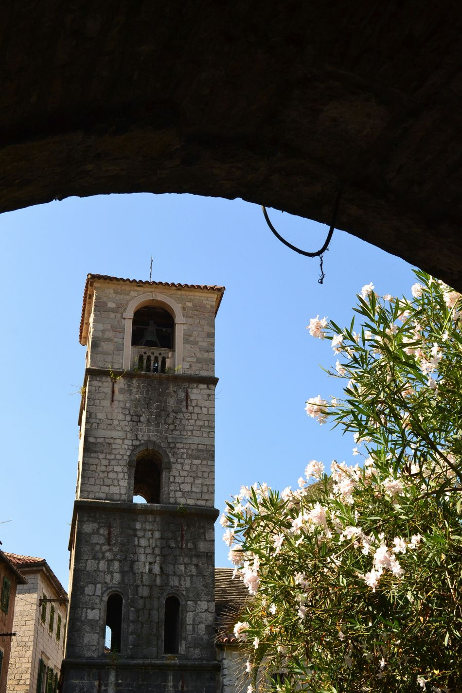 Blooming surprise Kotor Cattaro Montenegro Belltower Bridge Flowers Nature Architecture Town Tower Shadows Silhouette Oleander History Hidden Gems  The Secret Spaces