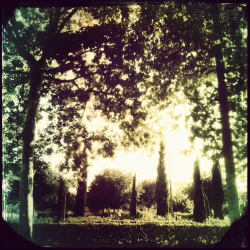 Streetphotography Hipstamatic Trees Backlight
