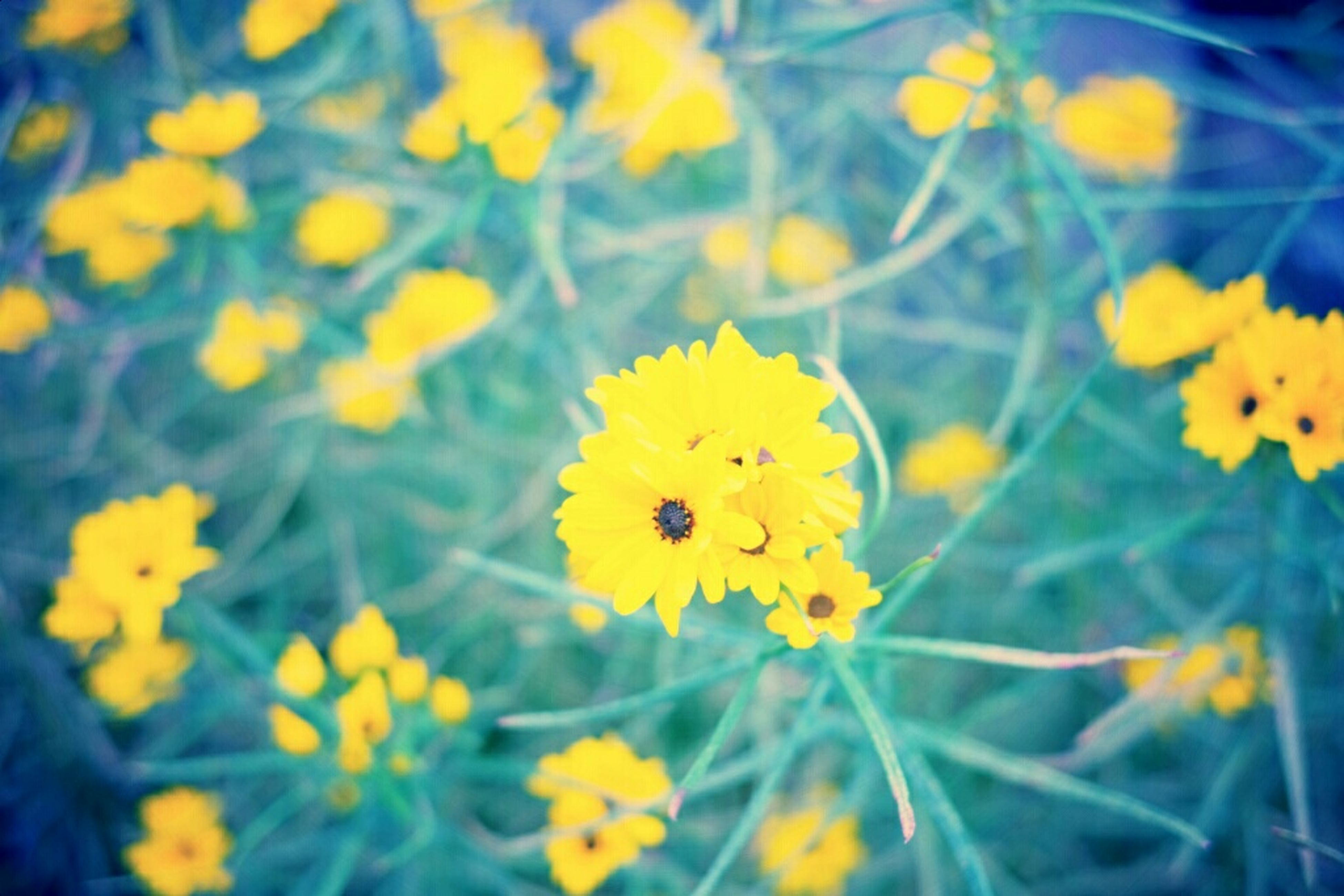 flower, yellow, petal, freshness, fragility, flower head, growth, beauty in nature, blooming, focus on foreground, nature, plant, insect, close-up, in bloom, selective focus, field, pollen, day, outdoors