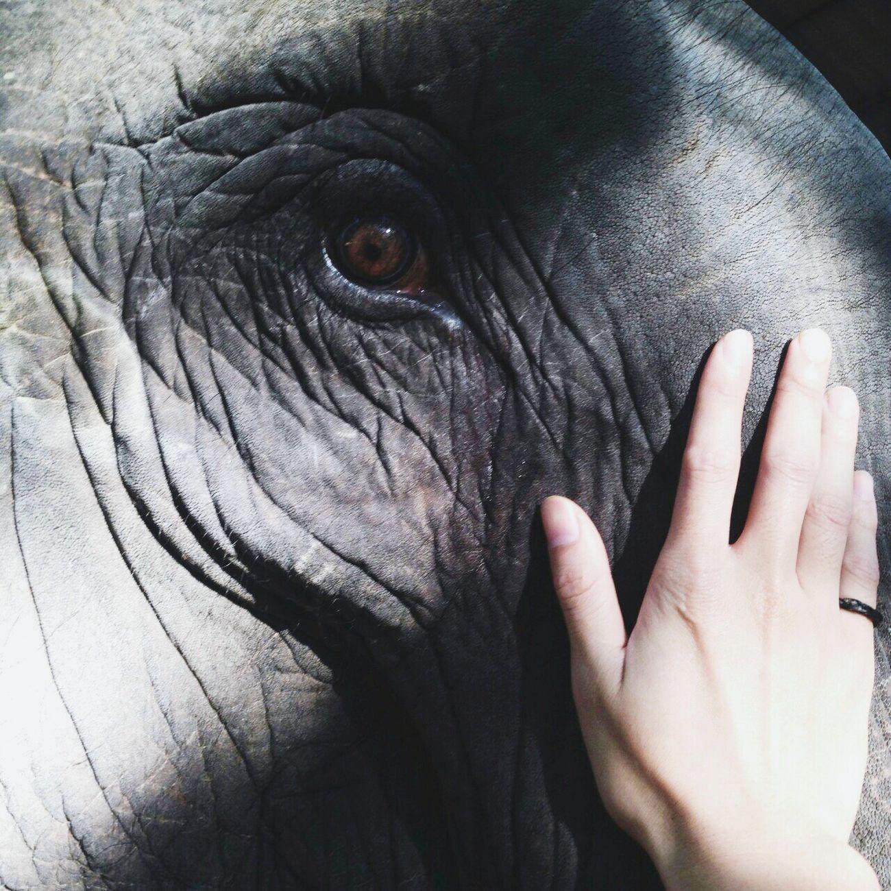 Woow Elephant Wolking Wonderful