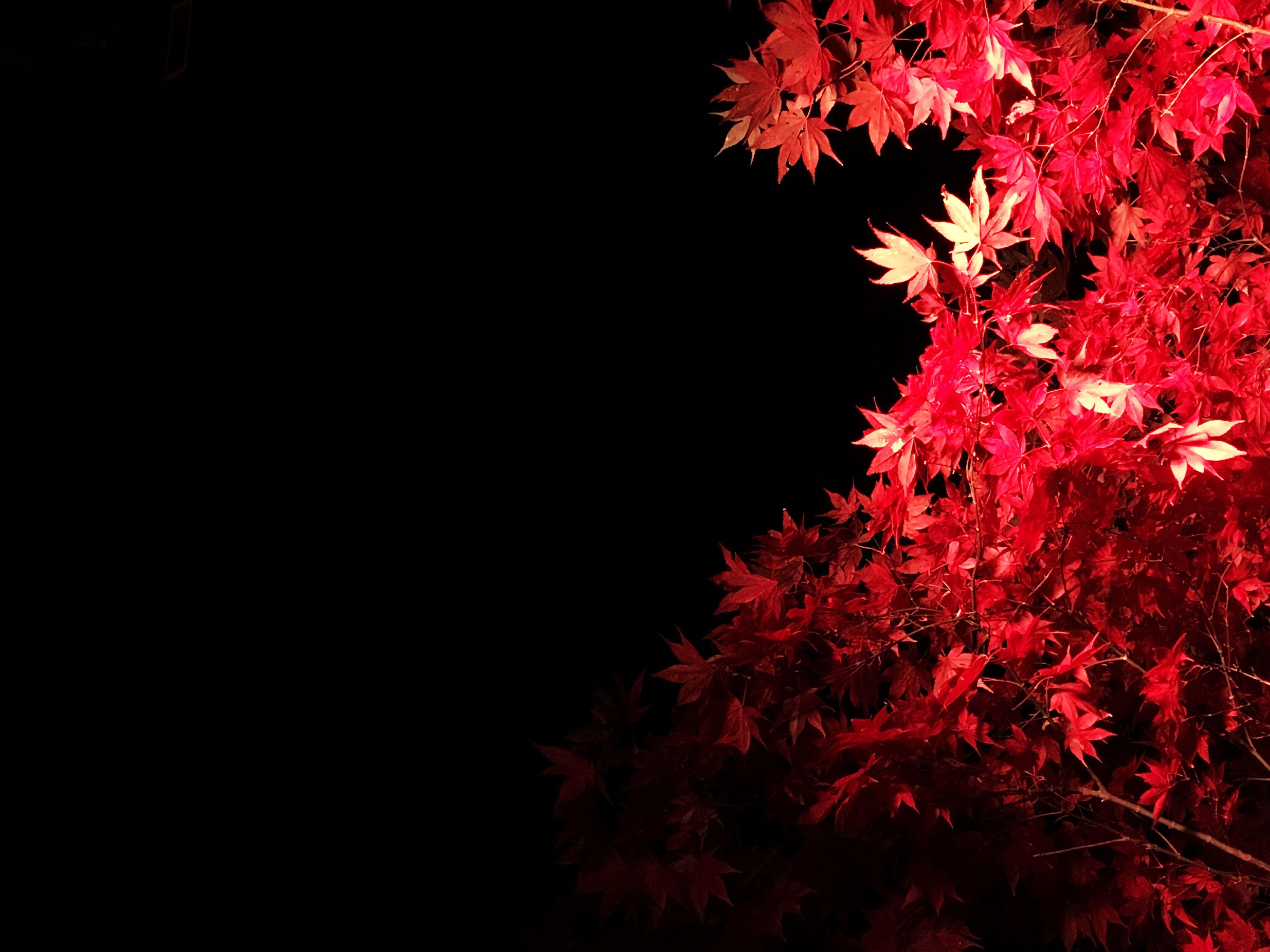 Matsushima 松島 紅葉 紅葉ライトアップ