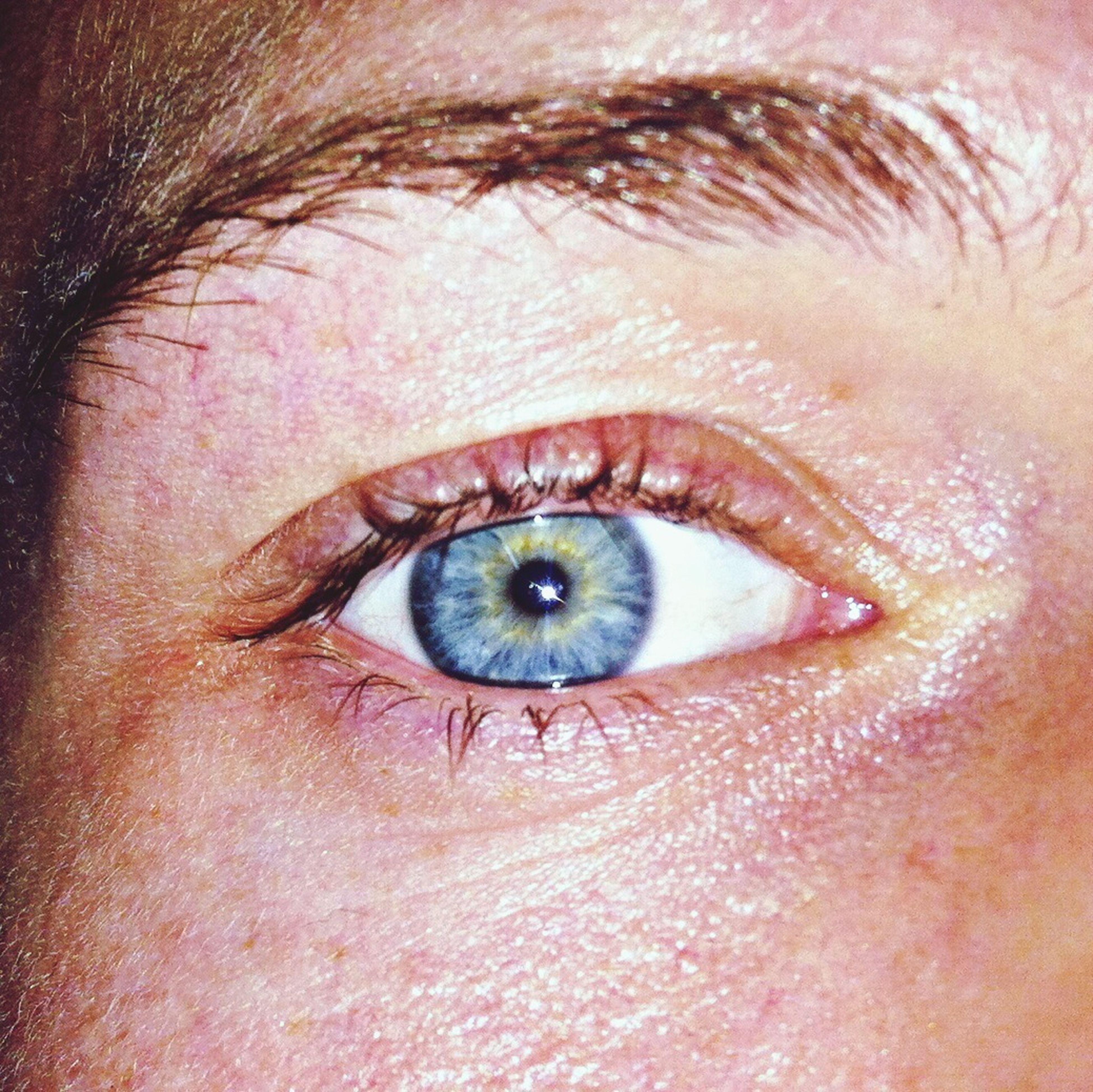 human eye, eyelash, eyesight, close-up, looking at camera, sensory perception, portrait, human skin, part of, iris - eye, extreme close-up, eyeball, eyebrow, human face, lifestyles, extreme close up, full frame