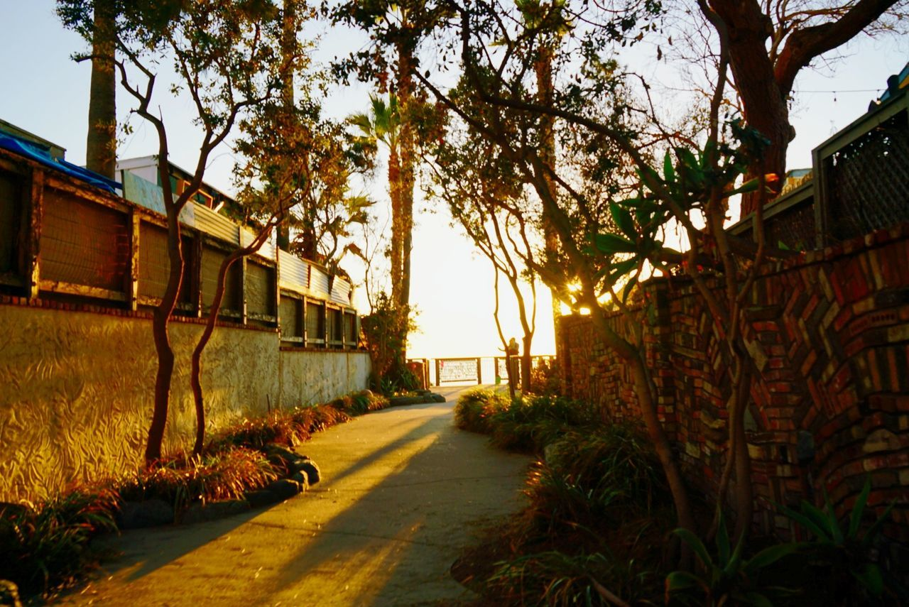 The City Light sun shines rhrough the palms and foliage of an oceanside cliff overlook in Laguna Beach, California. Tree Built Structure Architecture Building Exterior Sunlight Sunset No People Sky Outdoors Growth City Day Laguna Beach, CA California Warm Peaceful