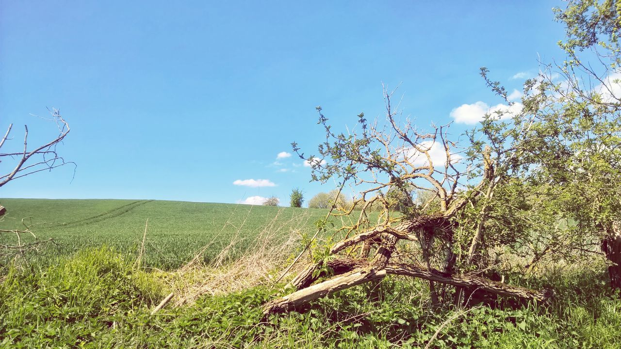 Fresh On Eyeem  Dead Tree Field Grass Himmel Und Wolken May Snag Springtime Spring Outdoors Sky_collection Germany🇩🇪 Tree Mobile Photography Nokia  Lumia1520 Lumiaphotography Blue Sky Sky And Clouds