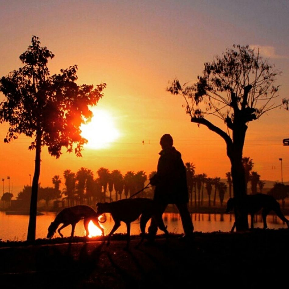 Love wot i saw, yesterday evening♥ Sunset Over The Lake Happy Guy On The Walk Dog❤ Pet Light And Shadow Nature Today's Hot Look Enjoying Life