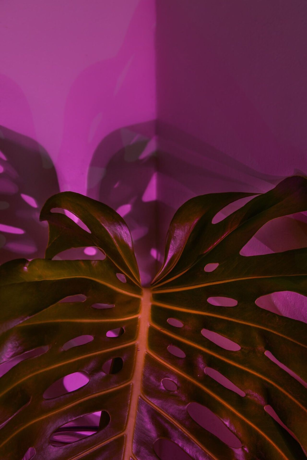 deliciousmonster Plant neon Lifestyle Pink Deliciousmonster Plant Neon Lifestyle Pink