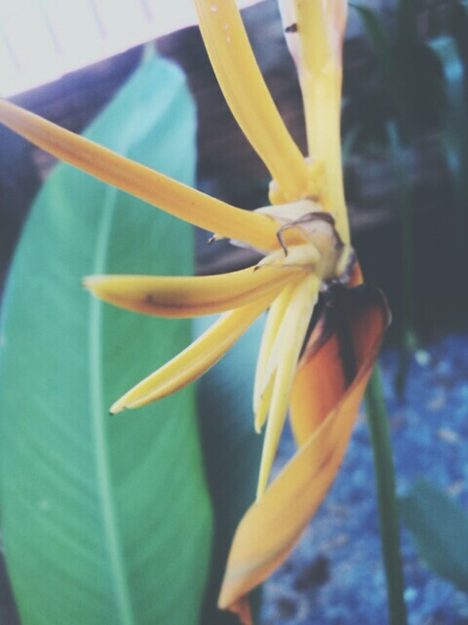 growth, flower, freshness, no people, petal, beauty in nature, close-up, nature, fragility, yellow, day, flower head, outdoors