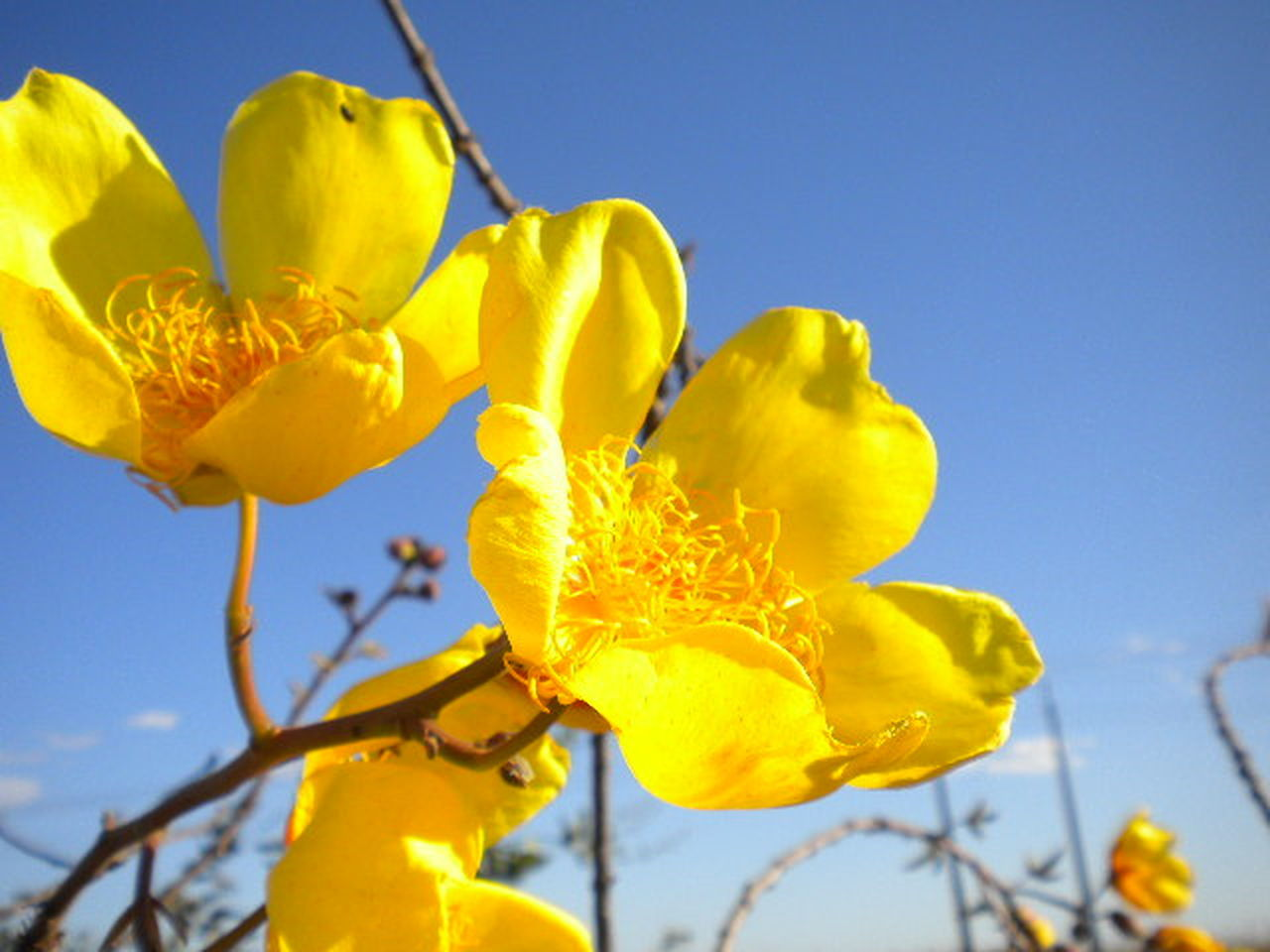yellow, flower, nature, growth, plant, outdoors, vibrant color, no people, blue, beauty in nature, close-up, day, fragility, freshness, low angle view, clear sky, sky