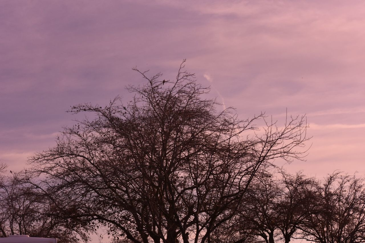 tree, bare tree, sky, nature, low angle view, branch, beauty in nature, sunset, no people, tranquility, outdoors, scenics, day