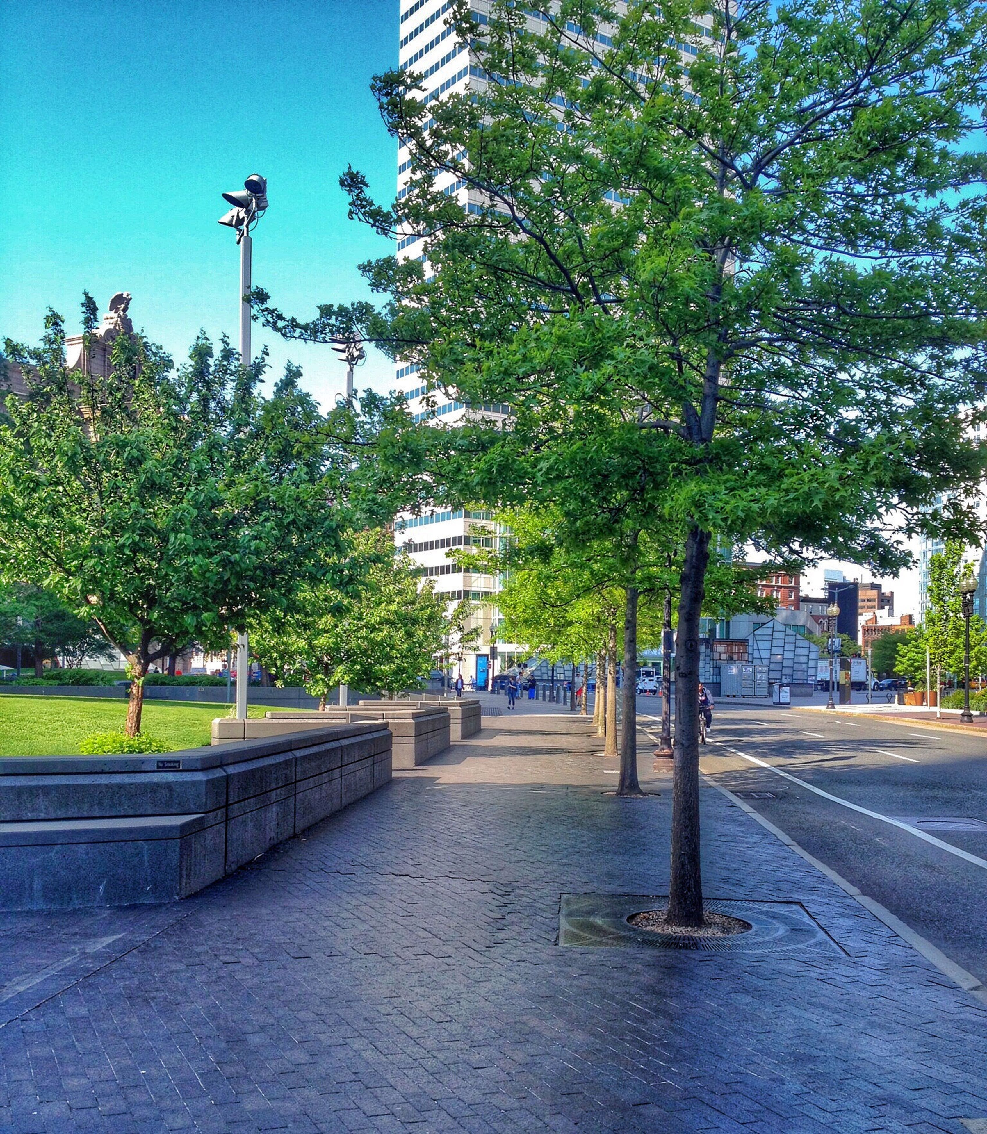 tree, built structure, architecture, transportation, building exterior, clear sky, road, the way forward, street light, city, railing, street, sunlight, incidental people, blue, sidewalk, connection, sky, bridge - man made structure, shadow