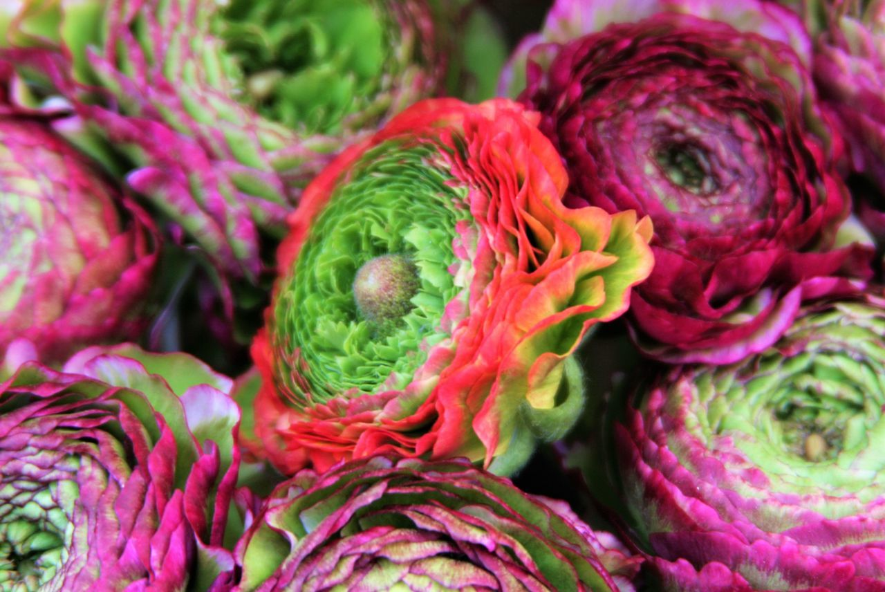 vegetable, freshness, close-up, purple, food and drink, retail, healthy eating, no people, pink color, market, day, outdoors, food