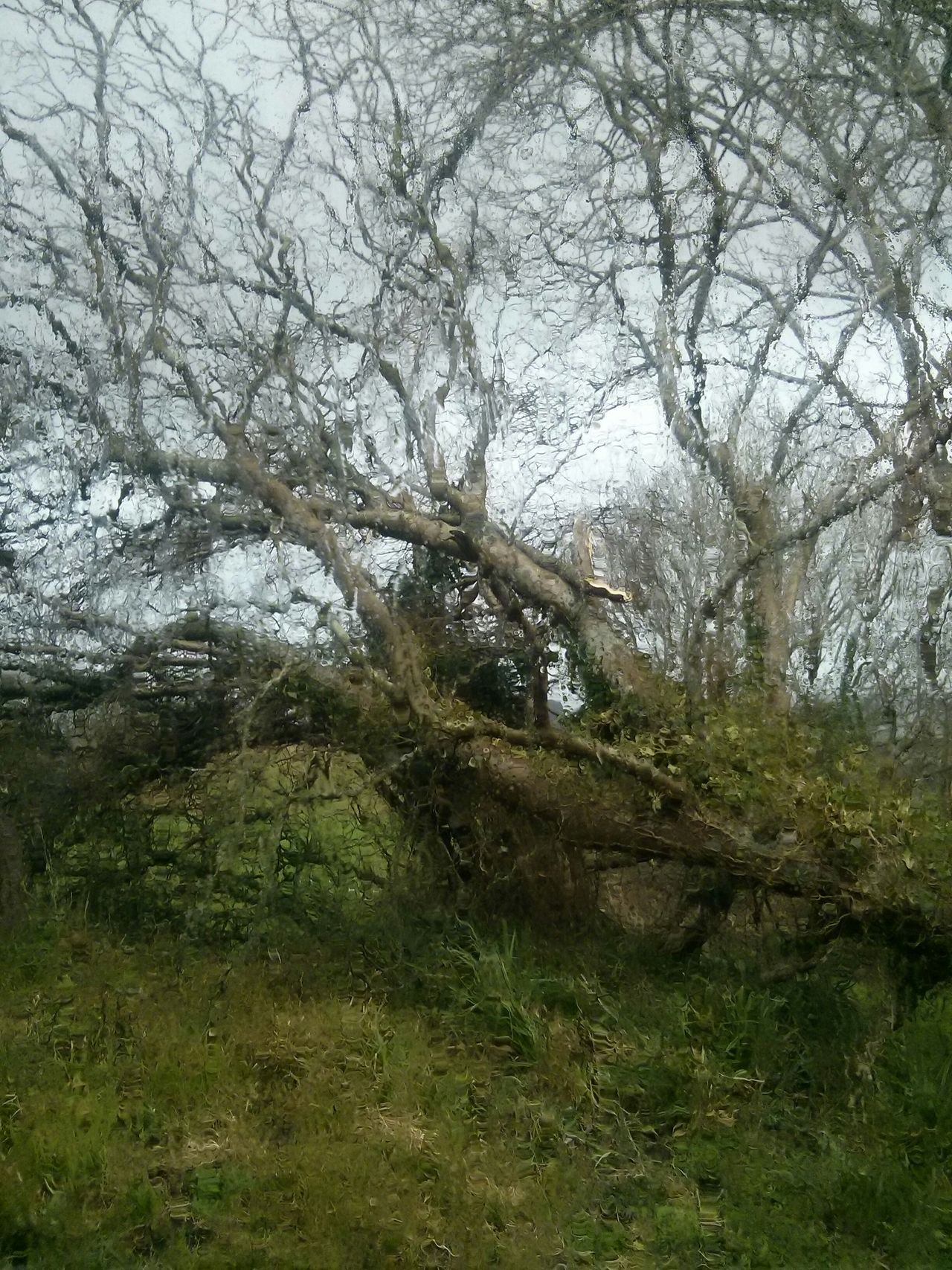 Tree Fallen Tree Rain Green And All Too Damp Oscar Wilde Countryside