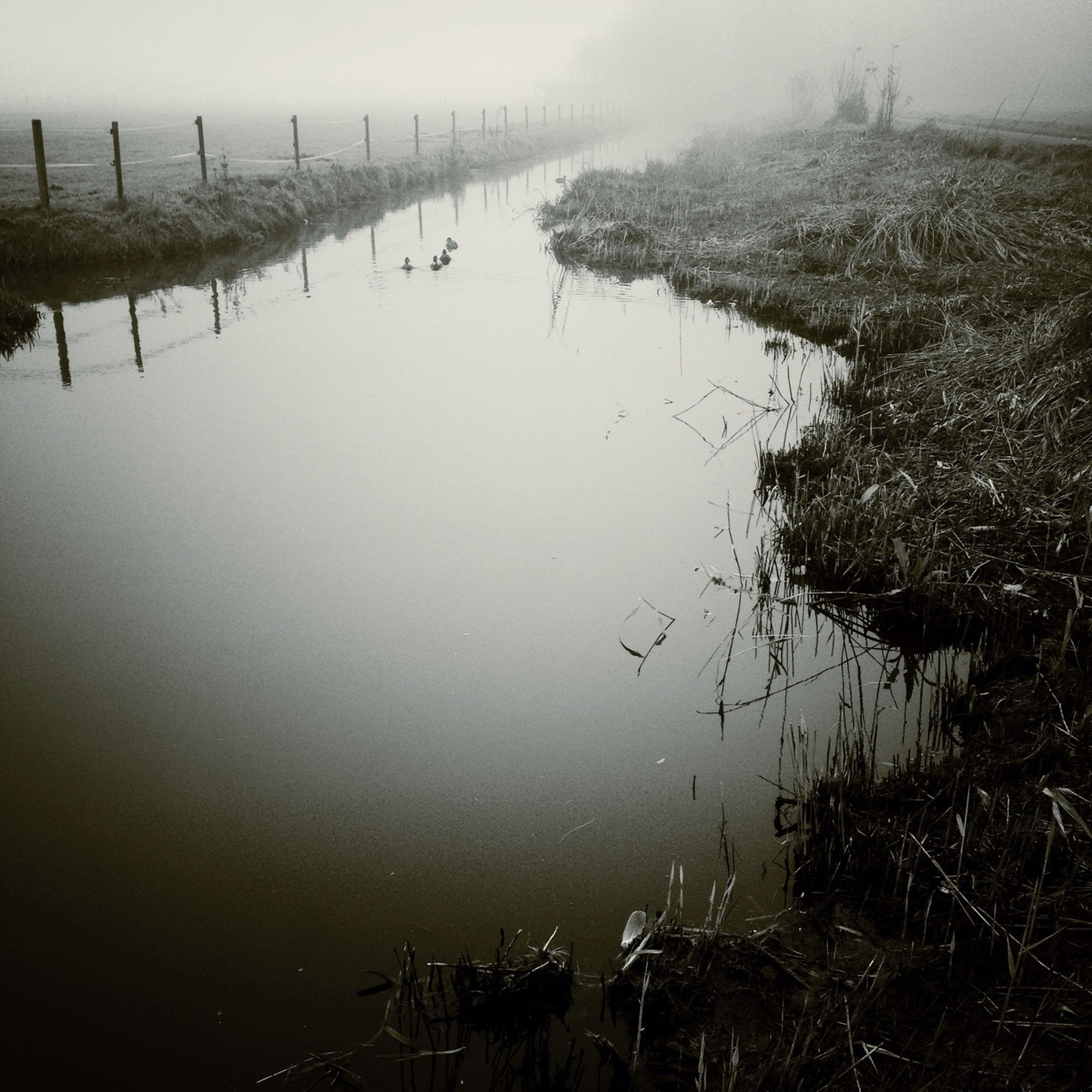 water, weather, reflection, wet, lake, fog, nature, rain, sky, tranquility, foggy, field, drop, river, plant, no people, day, standing water, tranquil scene, outdoors