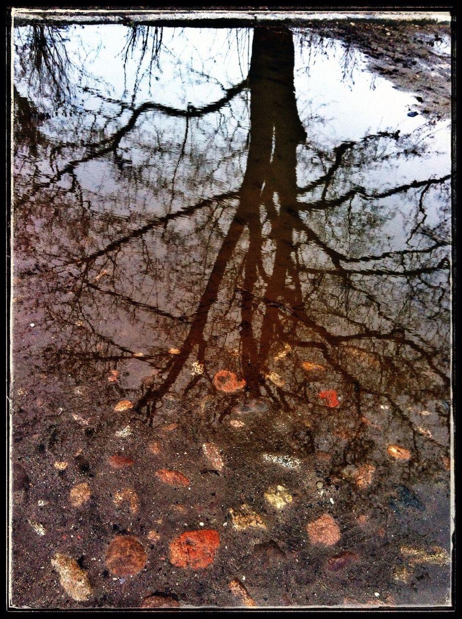 Baumkult(ur) Pfützenbilder Nature Regen