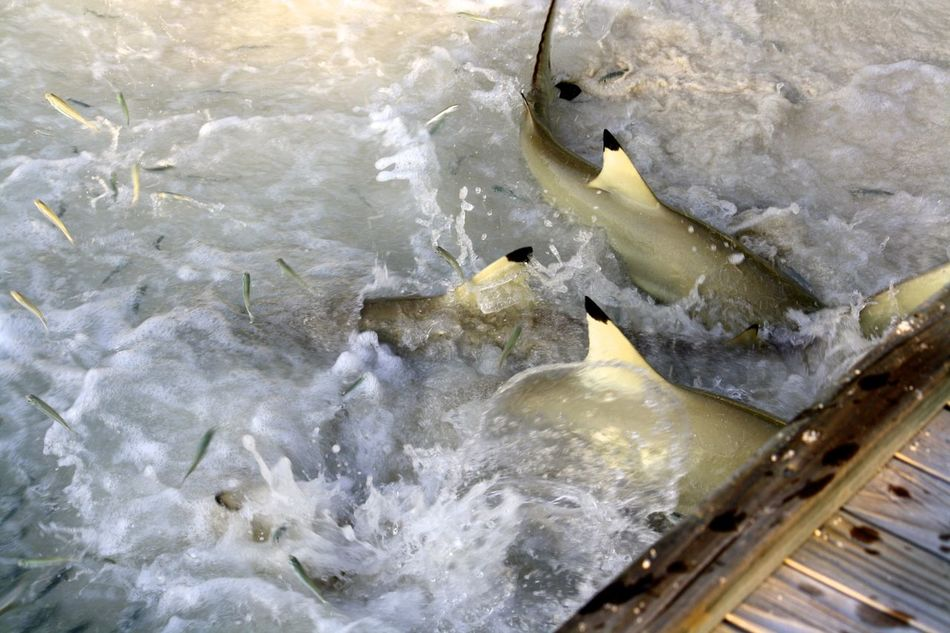 Beautiful stock photos of action, Animal Themes, Day, Fish, High Angle View