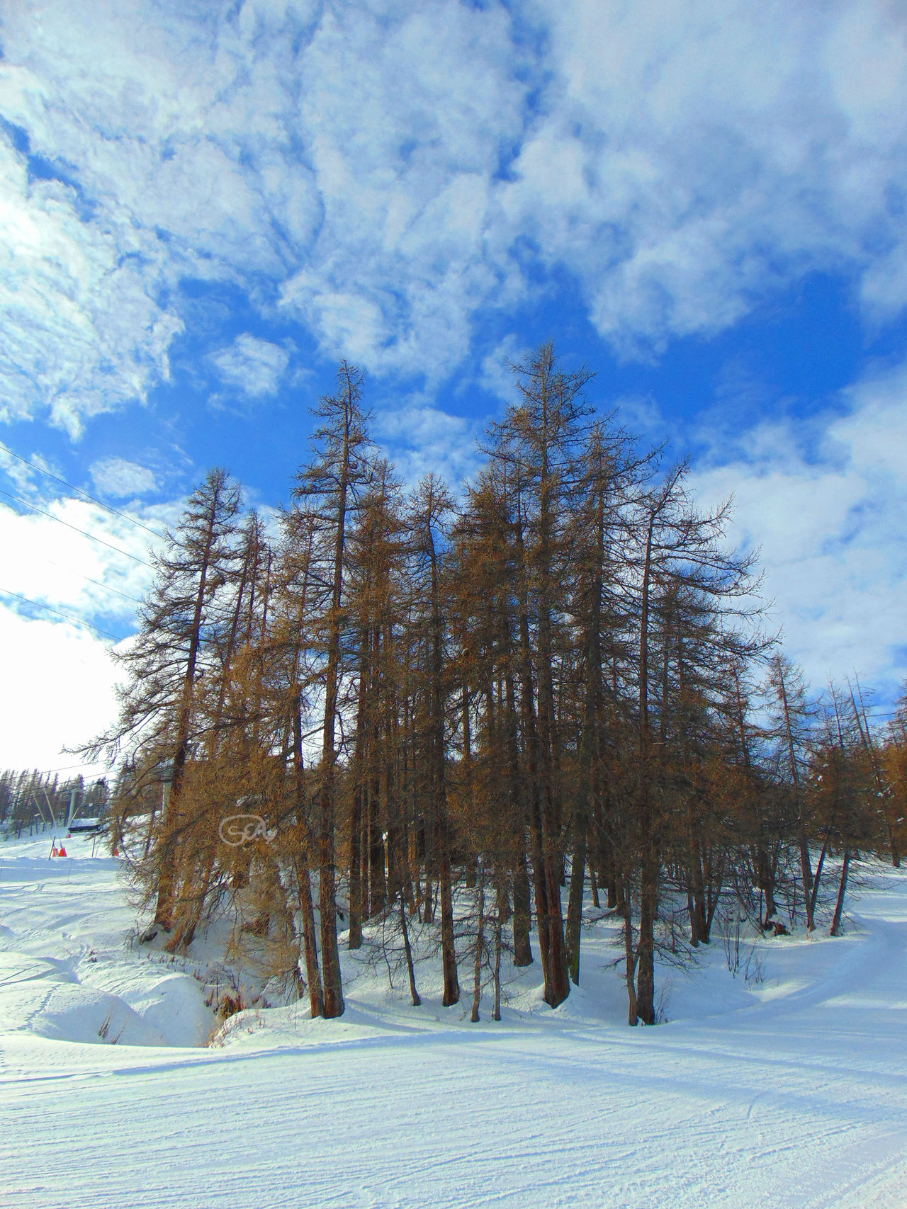 Serre Ratier, France Beauty In Nature Cloud - Sky Cold Temperature Europe Forest Landscape Landscape_Collection Landscape_photography Nature Nature Nature Photography Nature_collection No People Outdoors Serre Chevalier  Serre Ratier Ski Sky Snow Snowboarding Travel Destinations Travel Photography Traveling Tree Winter