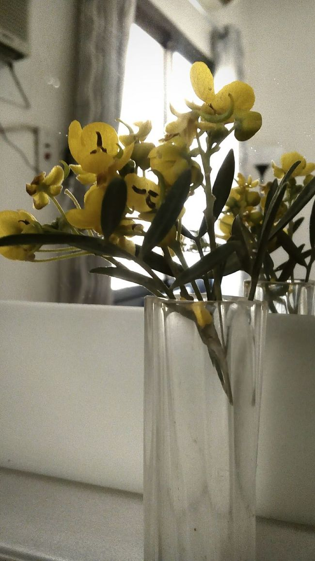 Beautiful Nature Yellow Flower Morning Light Light And Shadow From My Point Of View Mirror Picture