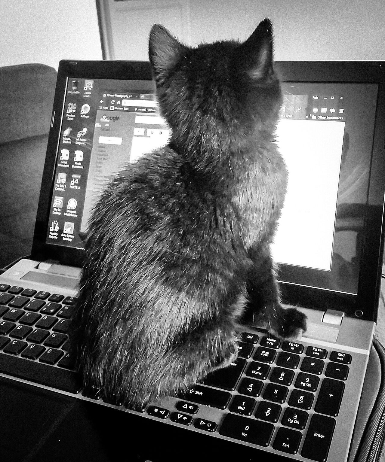 A helping hand Catarazzi Cat Paws No Work Today Helpful Laptop Kitten Catsofinstagram Cats Of EyeEm Blackandwhite