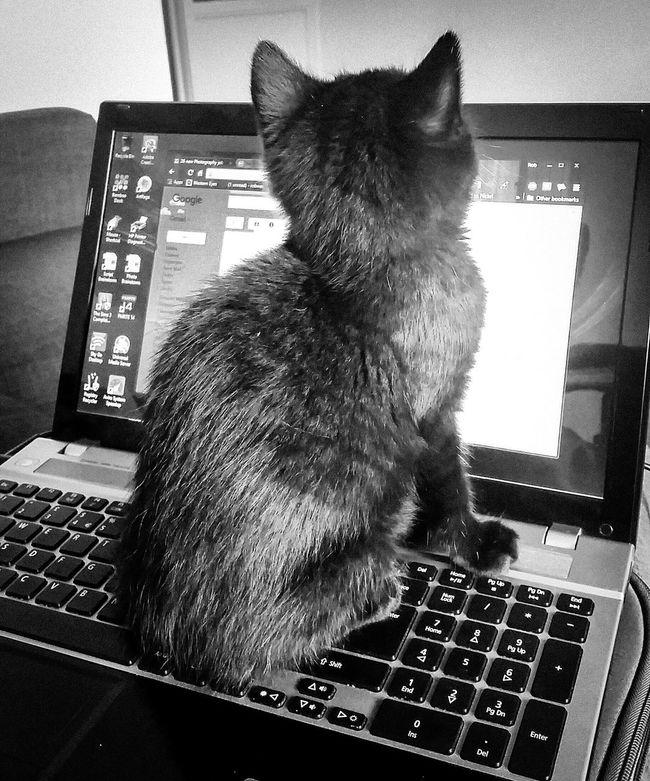 A helping hand Catarazzi Cat Paws No Work Today Helpful Laptop Kitten Catsofinstagram Cats Of EyeEm Blackandwhite