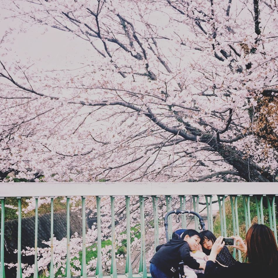 Cherry Blossoms Real People Beauty In Nature Tree Day Childhood VSCO Mobilephotography Eyem Best Shots Outdoors