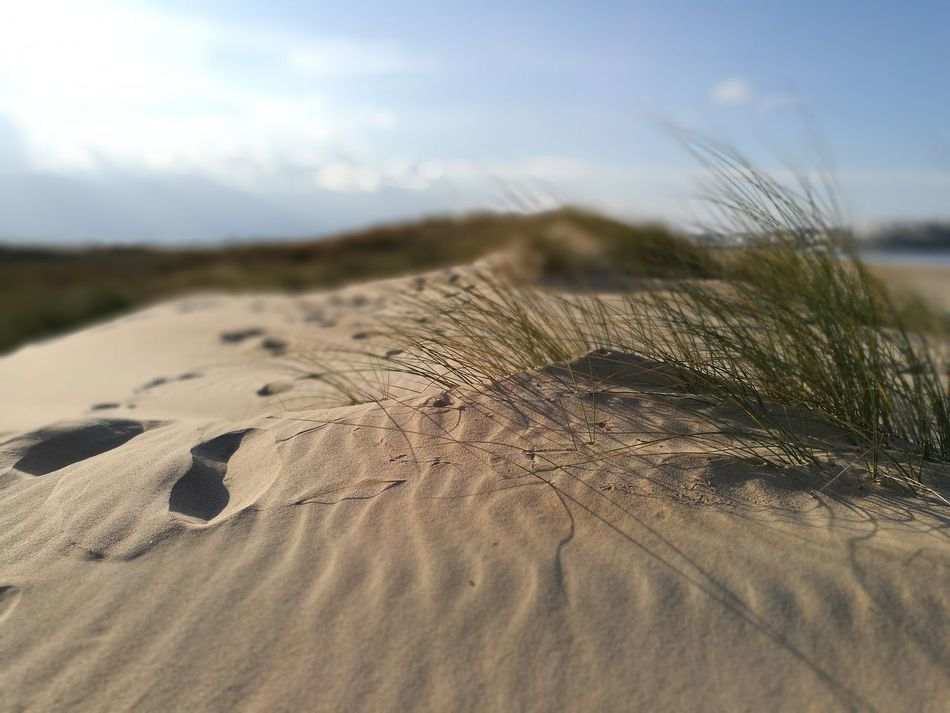 Sand Nature Sand Dune Outdoors Sky Landscape Beach Tranquility No People Beauty In Nature Close-up Arid Climate Day EyeEm Nature Lover HuaweiP9 Cantabria Nofilter EyeEm Best Shots Beauty In Nature