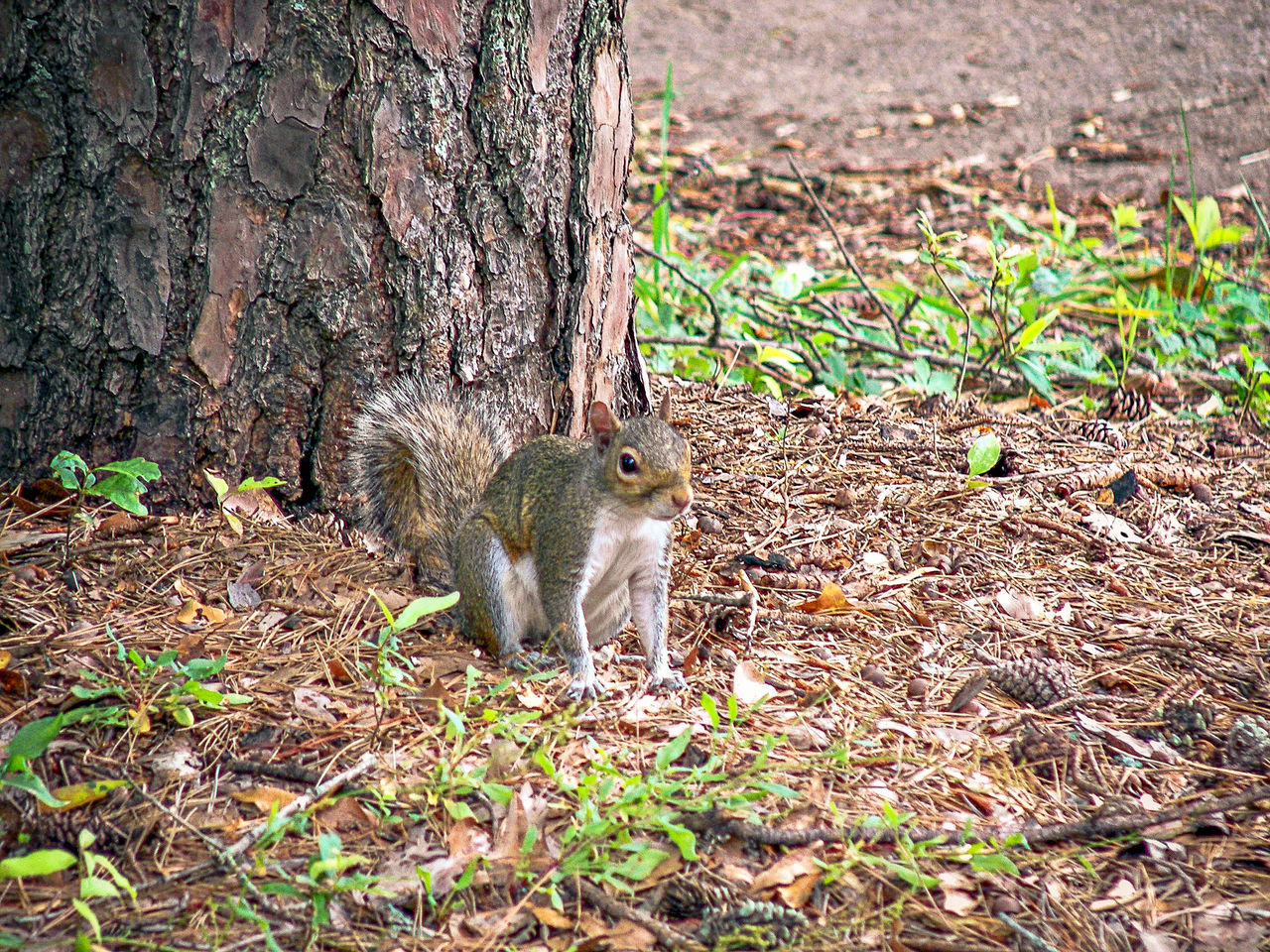 Animal Animal Themes Animal Wildlife Animals In The Wild Close-up Day Eating Food Mammal Nature No People One Animal Outdoors Rodent Squirrel