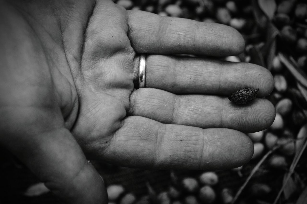The soil is not always promising. This hand that is holding a dead olive has to feed a family. 🍃 Human Body Part Human Hand Focus On Foreground Close-up Adult Nature Soil Olive Olive Branch Blackandwhite Black And White Marriage  Ring Agriculture Emotional Palm Dramatic Dramatic Lighting Dramatic Black And White BYOPaper! The Photojournalist - 2017 EyeEm Awards