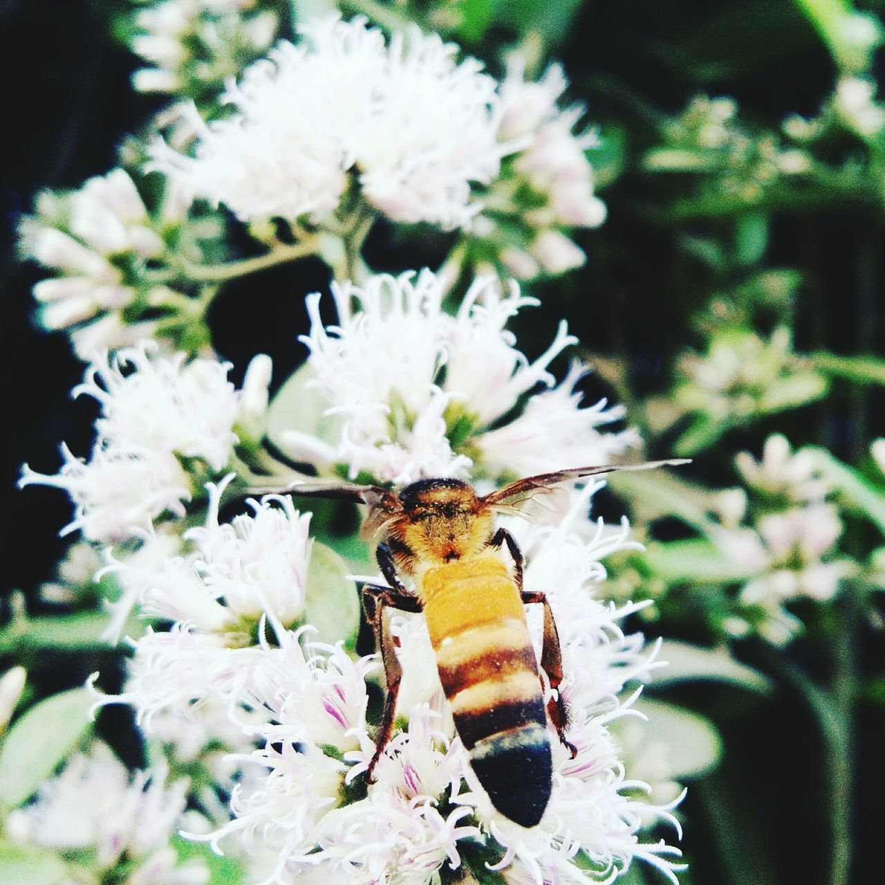 Nature Flower Insect Growth Animal Themes Plant Outdoors One Animal No People Fragility Freshness Pollination Flower Head Day Beauty In Nature Close-up
