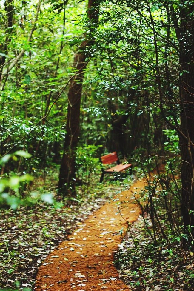 Nature Photography Nature 망오름 제주도 제주오름 Oreum Woodworking Summer Views EyeEm Nature Lover Korea Trip Jejuisland Korean View Color Of Nature Summer