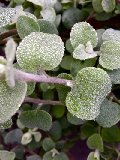Dewdrops. Dew Dewdrops Morning Dew Leaves