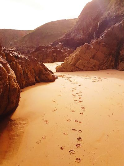 Paw prints in the sand. Beach Nature Outdoors Coastline Pets
