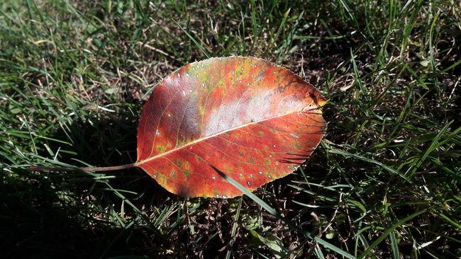 Fall Sunshine Fallen Tree Fall Colors Fall Beauty Fallen Leaves Tree Nature Beauty In Nature Calm