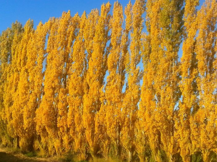 Yellow Colorful Day Outdoors Beauty In Nature Gold Colored Beautifully Organized