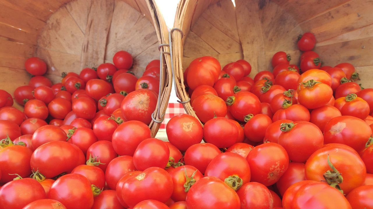 A bountiful harvest of summer tomatoes. Bountiful Harvest Red Tomatoes Bushel Baskets Low Angle View Organic Gardening Organic Produce California Produce Organic Fruits Organic Vegetables Organic Summer Farmers Market Summer Produce California Mountain View, Ca