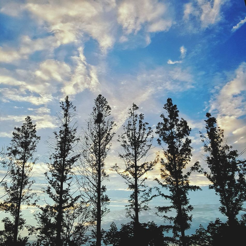 Romantic Landscape Goodweather Green And Sky Nature No People Day Nature Cloud - Sky Sky Beauty In Nature Scenics Tree Love Tree My Sky Comfortable ☁☁☁ 😍😌😊