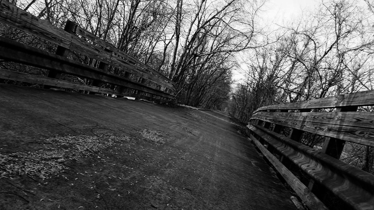 Architecture Beauty In Nature Blackandwhite Bridge - Man Made Structure Built Structure Day Enjoying Life EyeEm Nature Lover Hanging Out Nature No People Outdoors Relaxing Sky Taking Photos The Way Forward Tree Wood - Material