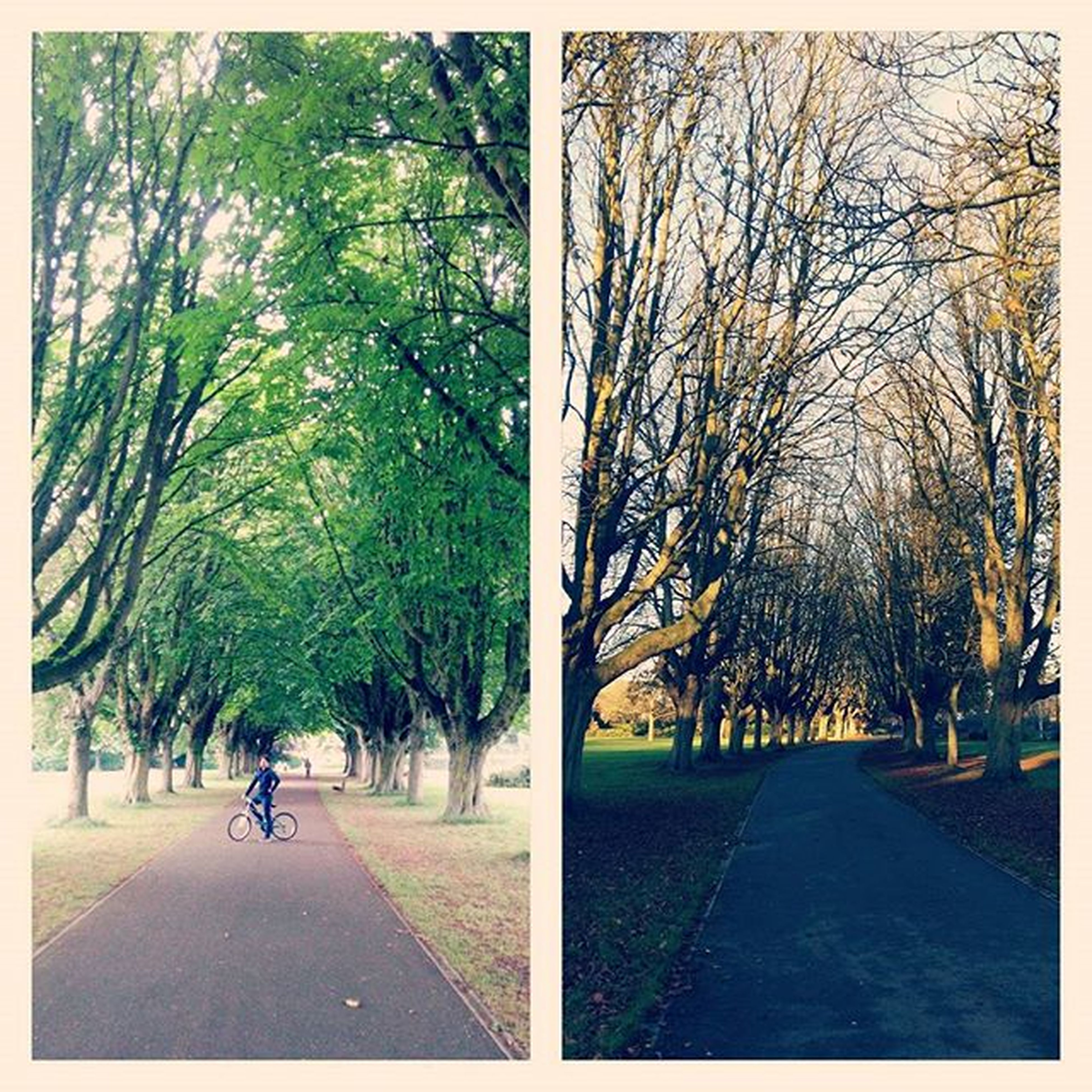 tree, transfer print, the way forward, auto post production filter, footpath, road, treelined, diminishing perspective, tree trunk, park - man made space, growth, street, branch, day, walkway, park, shadow, sunlight, outdoors, transportation
