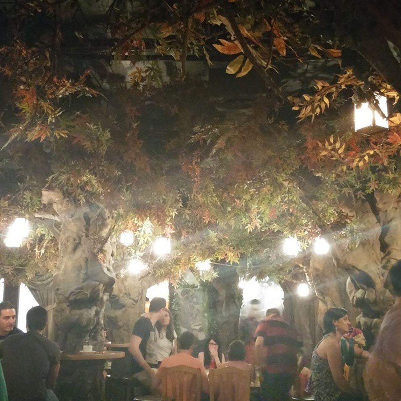 Elboscdelesfades Fairy Fairyforest Keiju Keijumetsä Barcelona Bcnexploradores Bcnexplorers Forestbar