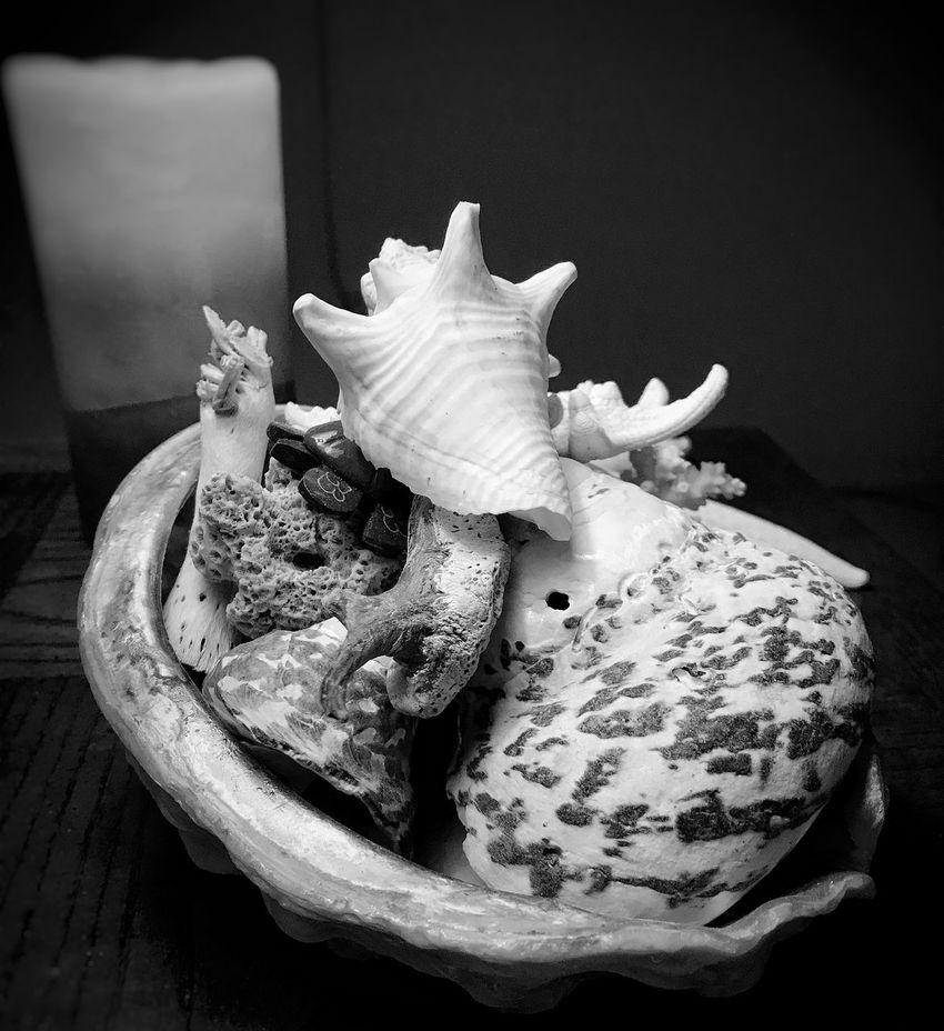 Shells Blackandwhite No People Indoors  Close-up
