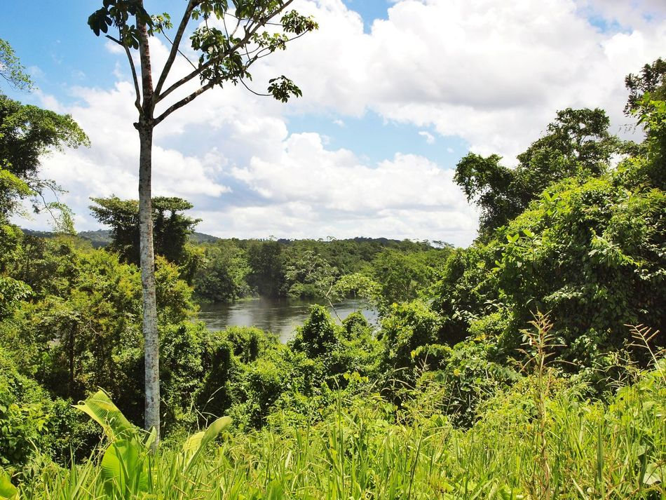 Nature Photography Clouds And Sky Nature Surinam Suriname Jungle Rainforest Jungle River Jungle River South America River