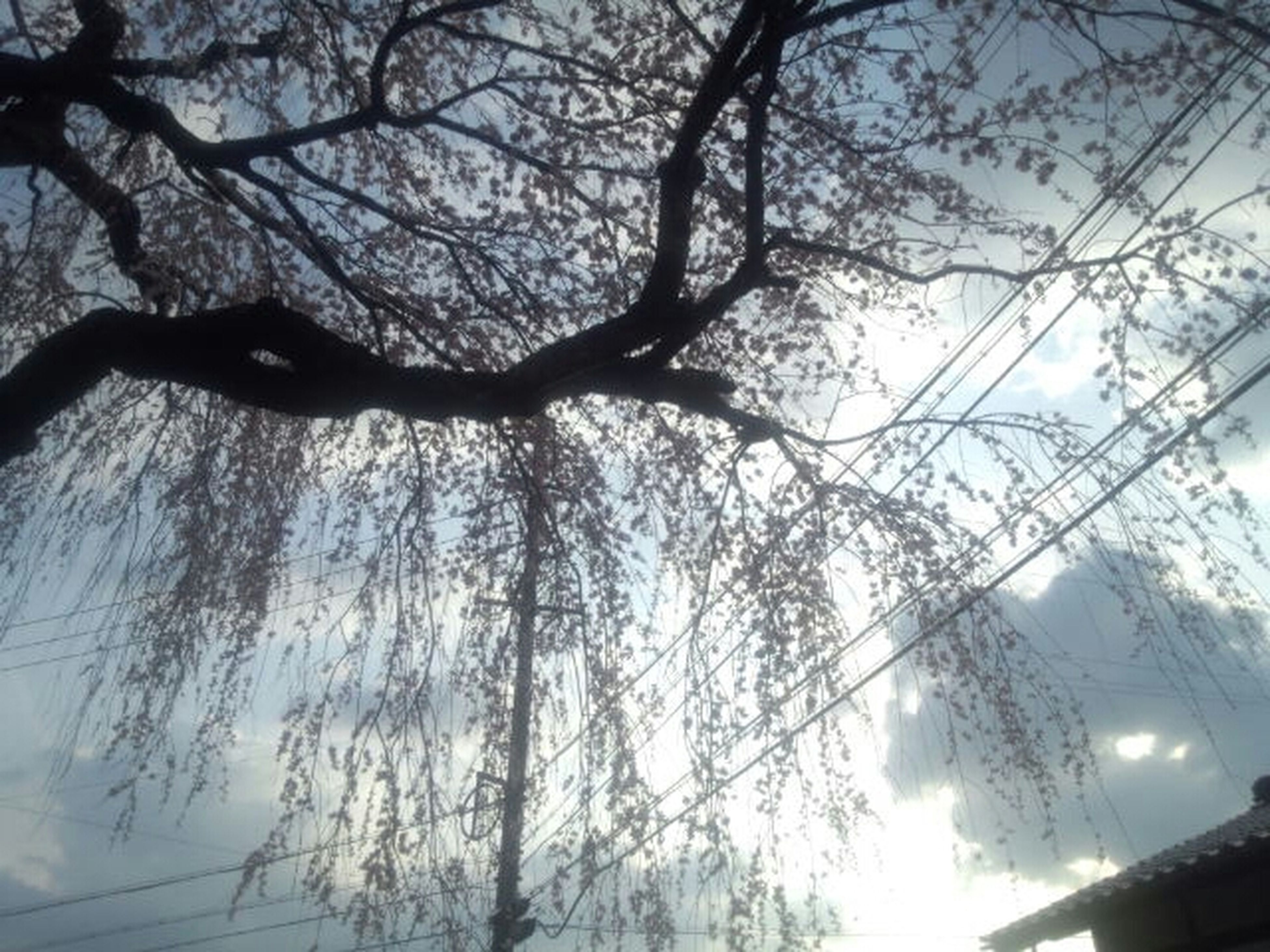 tree, low angle view, branch, bare tree, silhouette, sky, nature, growth, tree trunk, beauty in nature, tranquility, outdoors, no people, day, sunlight, scenics, directly below, built structure, clear sky, dusk