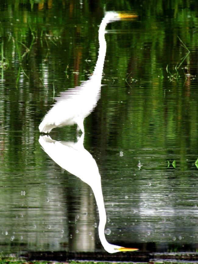 Water Reflections Garças Birds Inverted Images Upside Down Getting Creative