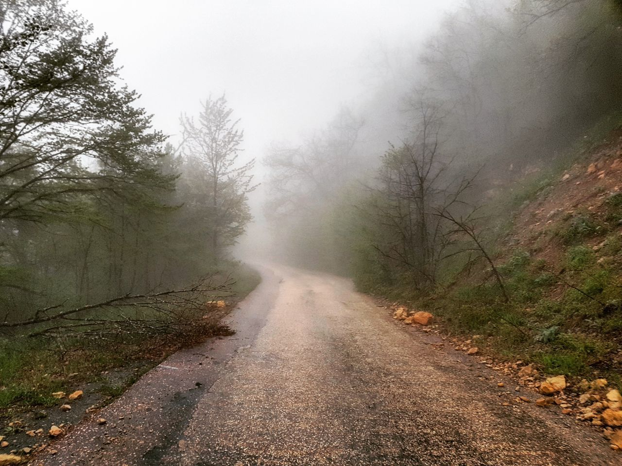fog, the way forward, foggy, diminishing perspective, mist, nature, road, day, no people, outdoors, landscape, beauty in nature, tree, scenics, mountain, hazy, sky
